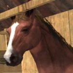 Horse Show Jump