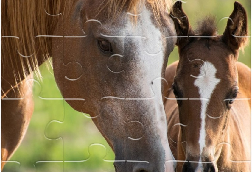 Image Pferde Jigsaw